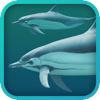 Dolphins 3D (AppStore Link)