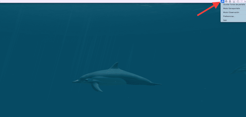 dolphins-app-1