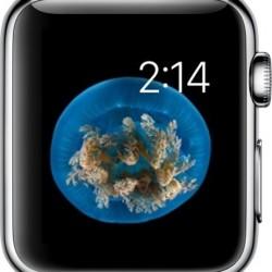 Watch-Face-on-Apple-Watch
