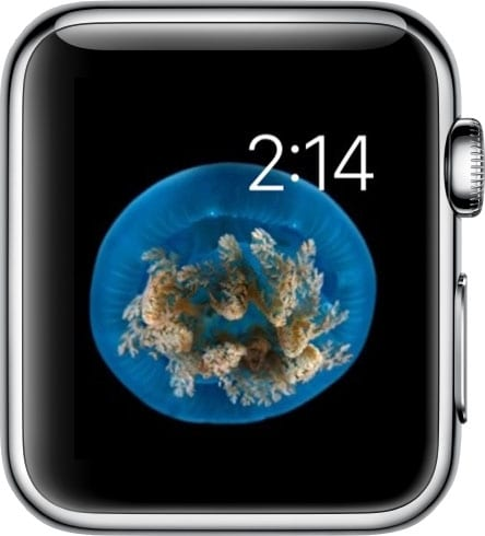 Watch-Face-on-Apple-Watch