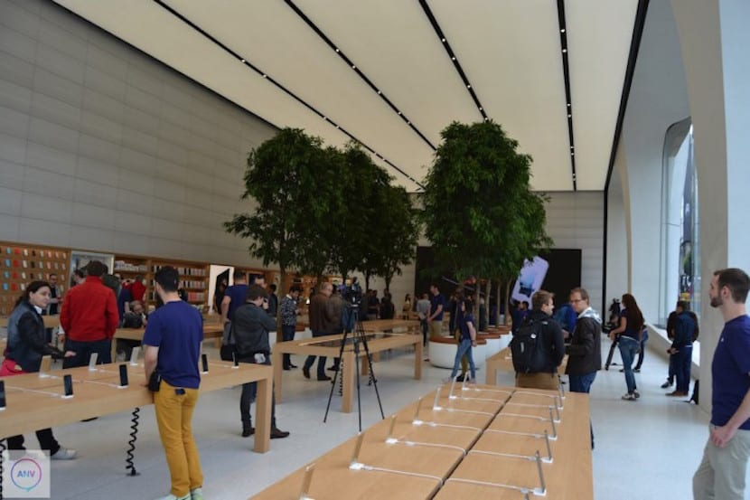 Apple-Store-Bruselas_arboles