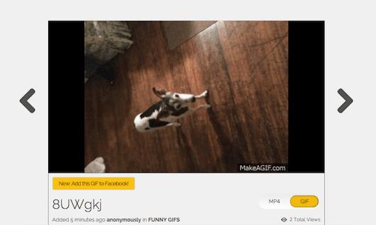 Cómo transformar Live Photos en GIFs