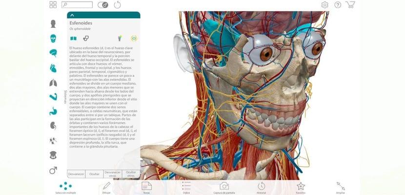 Descubre los secretos de la anatomía humana en 3D en tu Mac